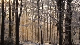Forest Winter